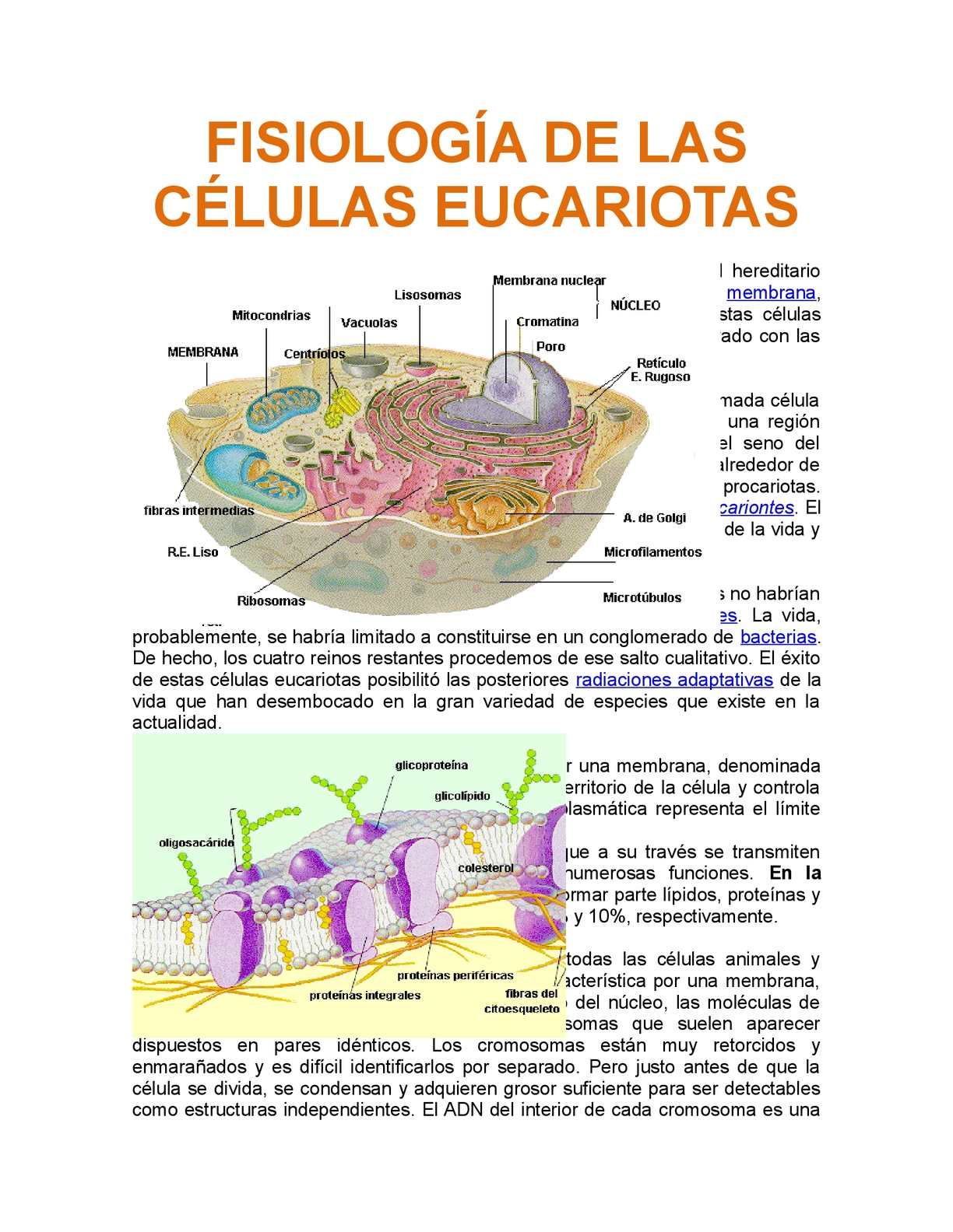 Calaméo Fisiología De Las Células Eucariotas