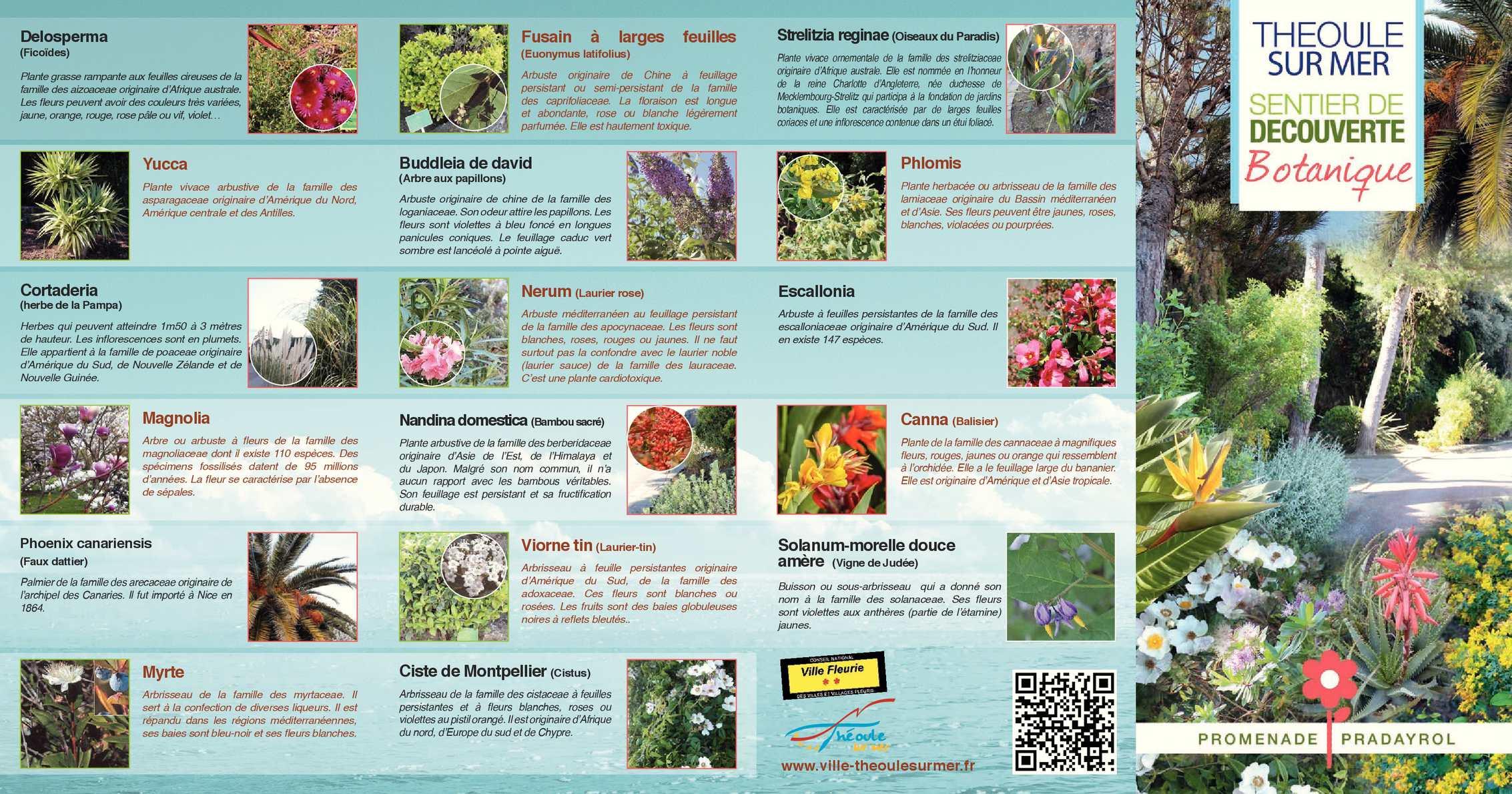 Arbuste Fleuri Feuillage Persistant calaméo - sentier de découverte botanique - théoule-sur-mer