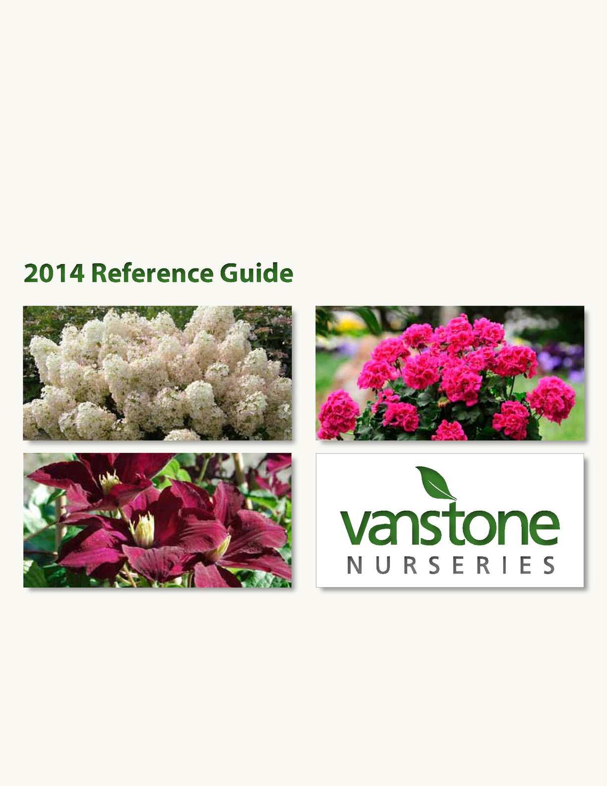 25 Bi Color Purple Clematis Seeds Flower Climbing Perennial Flowers Seed 580
