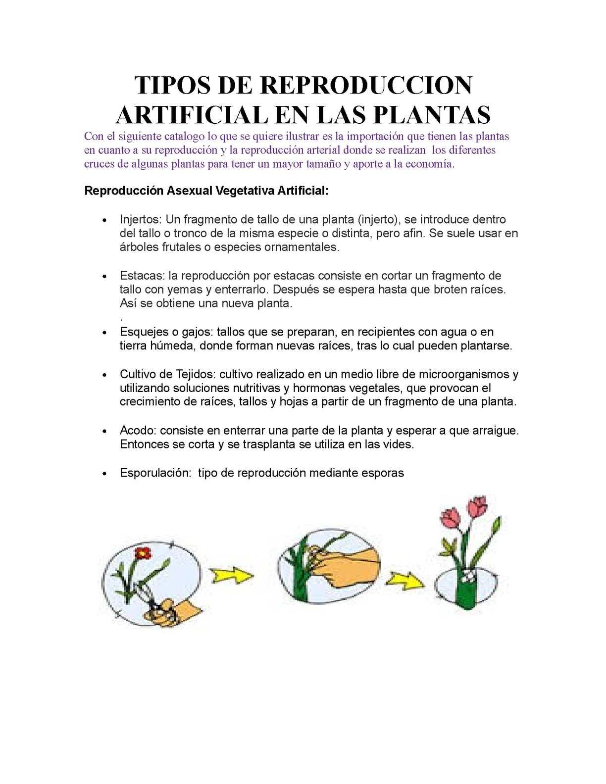 Los dos tipos de reproduccion asexual en plantas cual es
