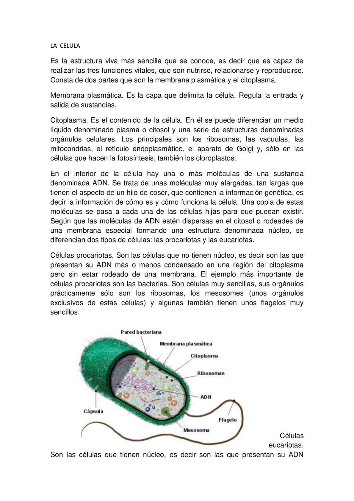 Calaméo La Celula