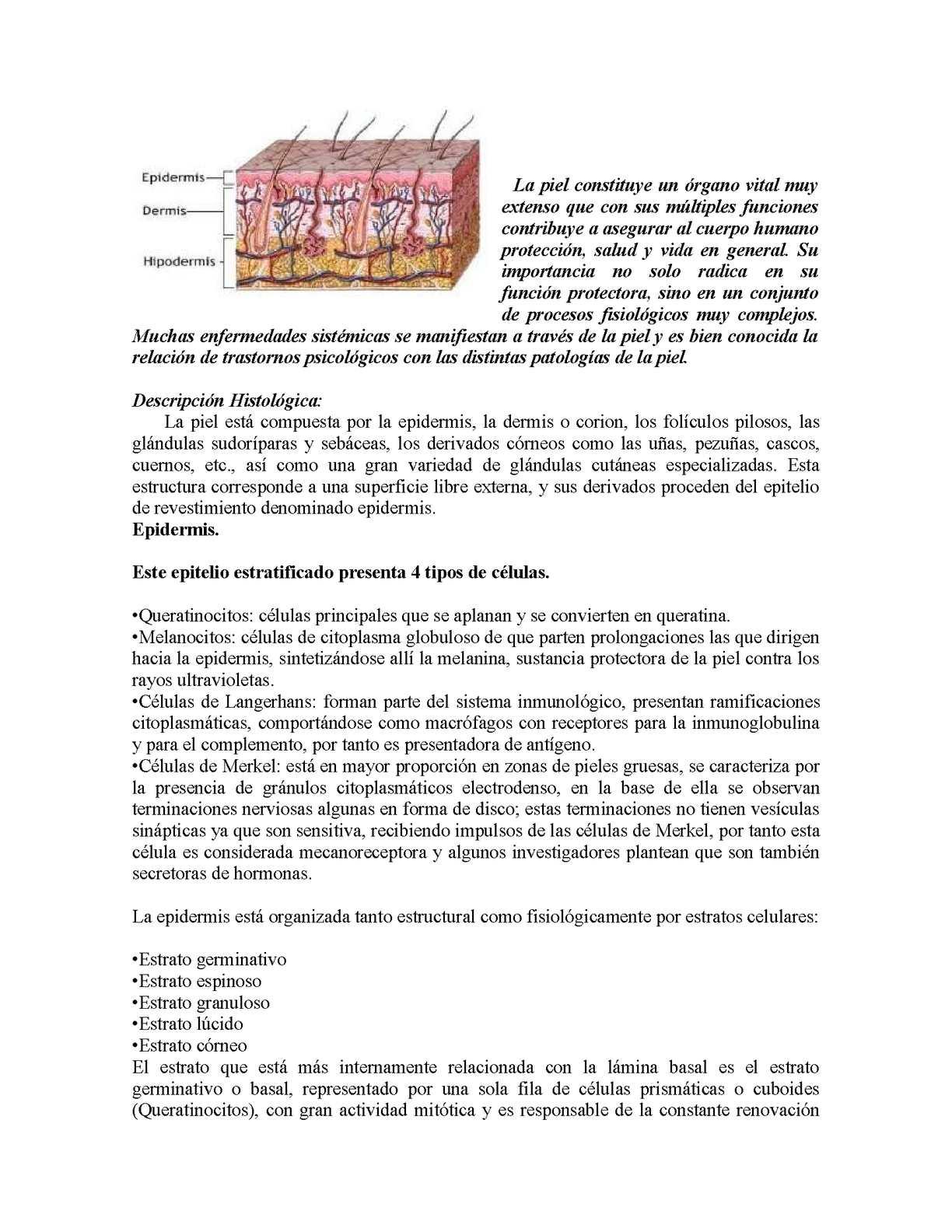 el tratamiento de la celulitis por erisipela incluye