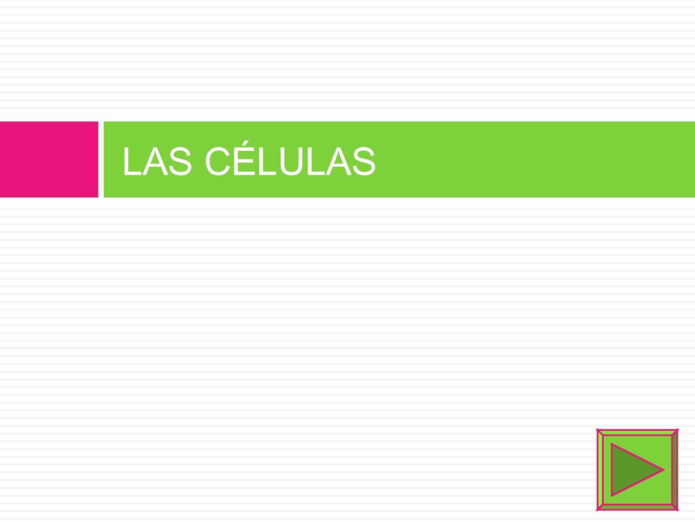 Calaméo 1 Células