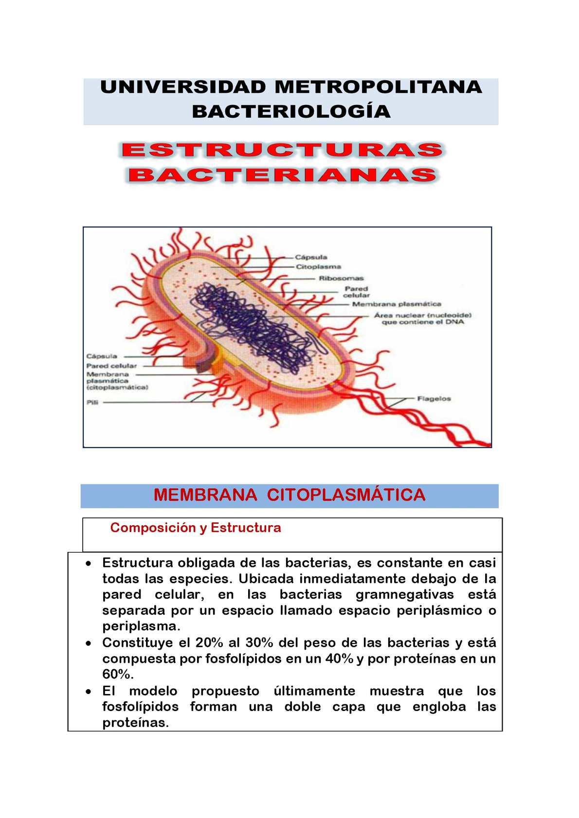 Calaméo Estructuras Bacterianas
