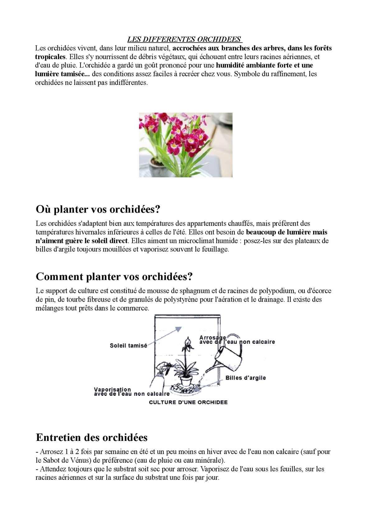 Comment Planter Une Orchidée calaméo - r 3e b lauryn alice