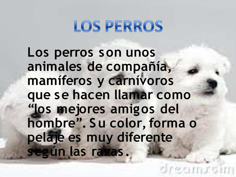 Calaméo Perros