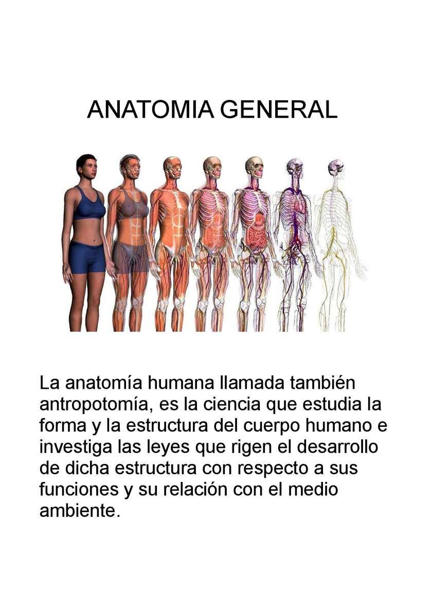 Calaméo Publisher Anatomia