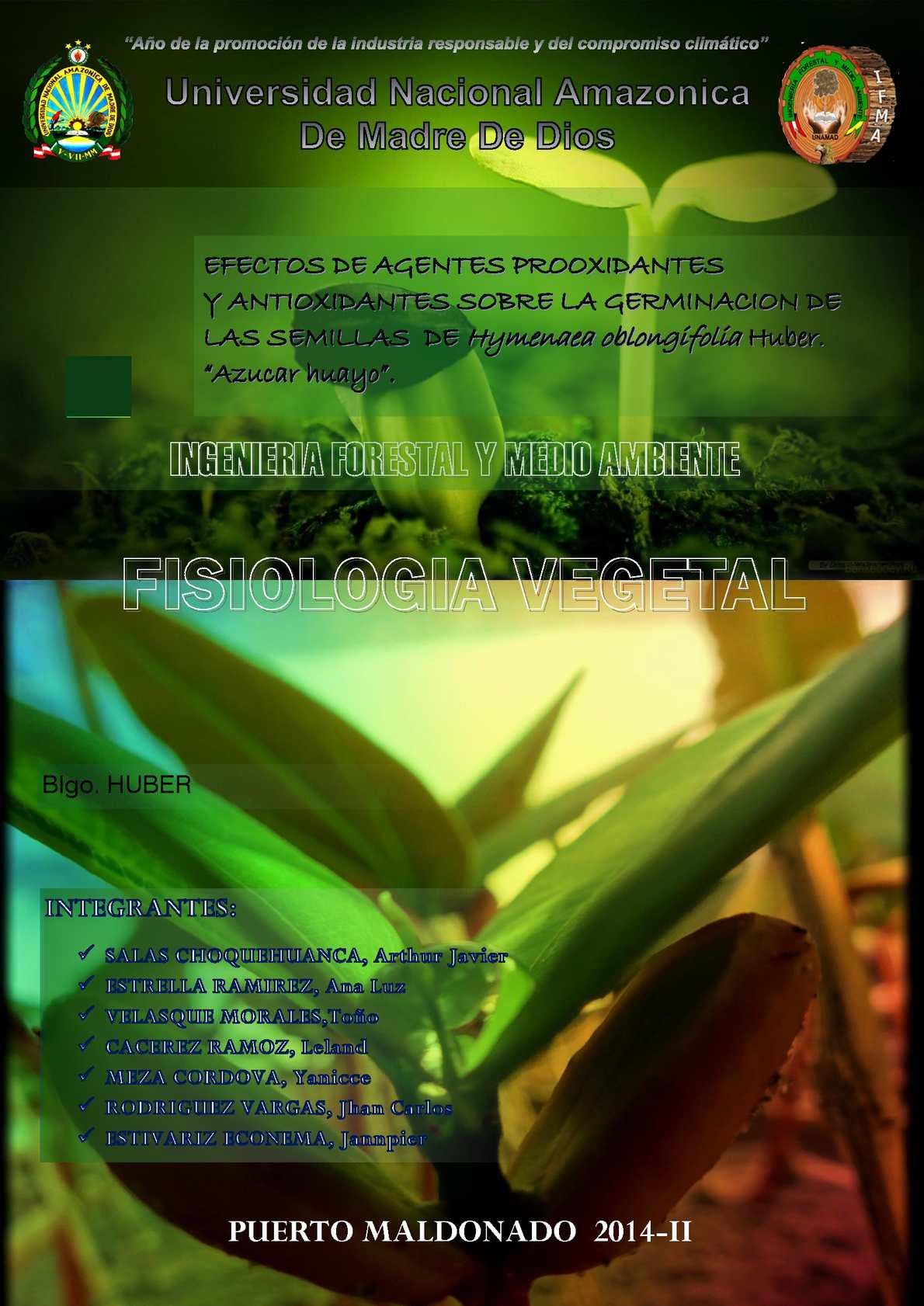 Germinacion De Hymenaea Oblongifolia Huber