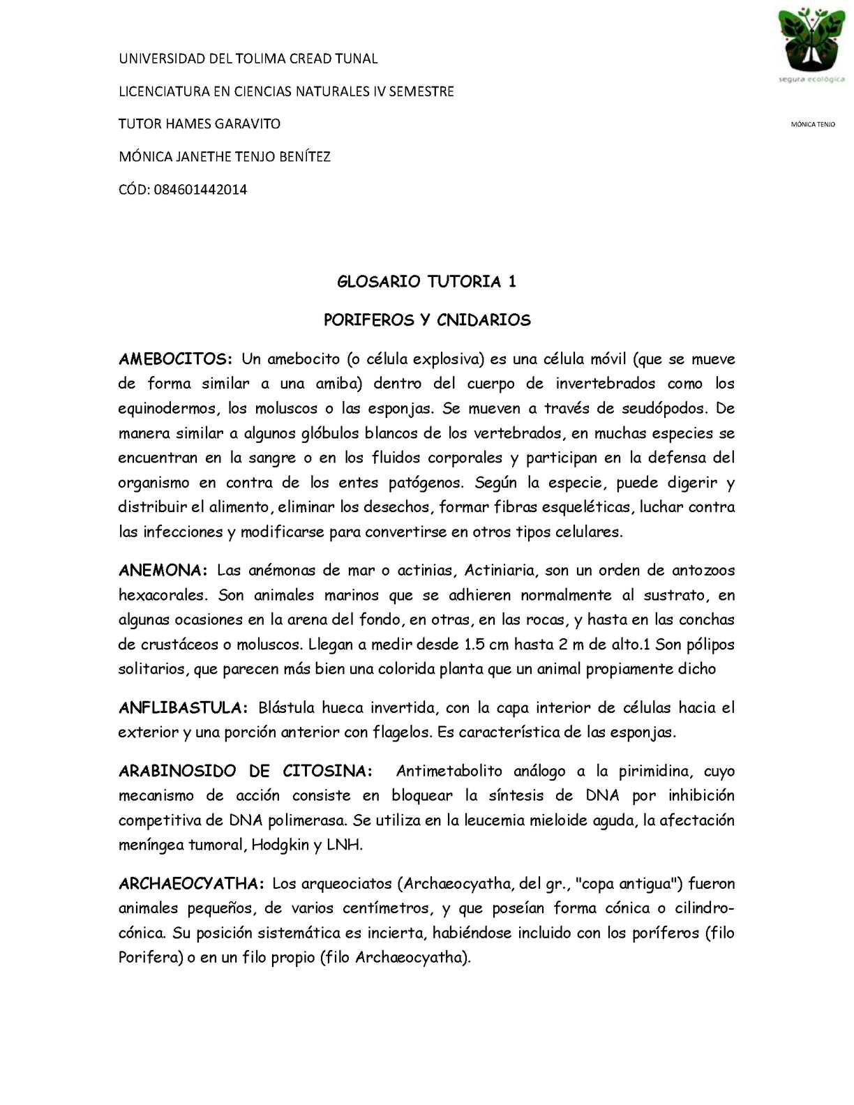 Calaméo Glosario Poriferos Y Cnidarios