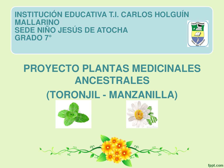 uso medicinal de la planta toronjil