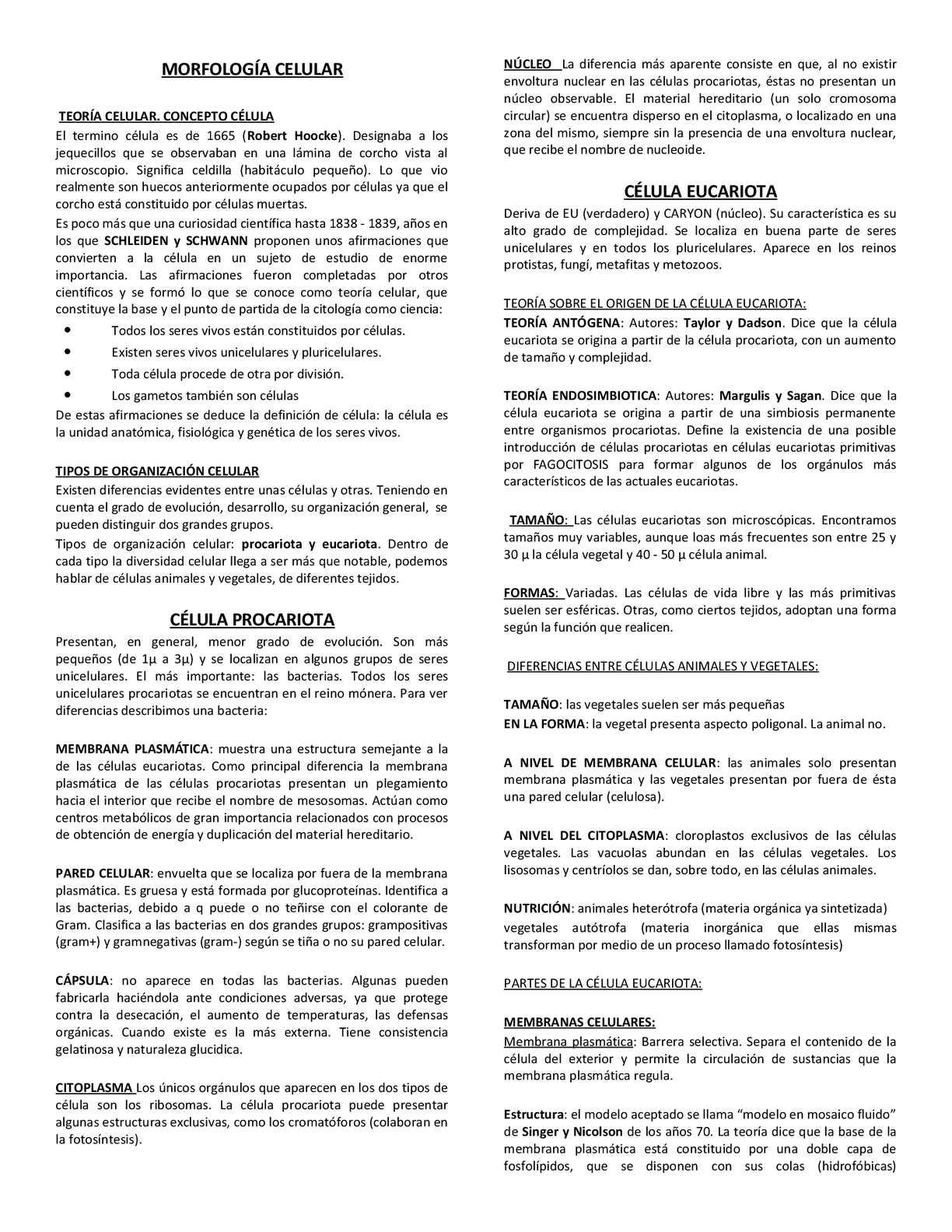 Calaméo Morfología Celular1