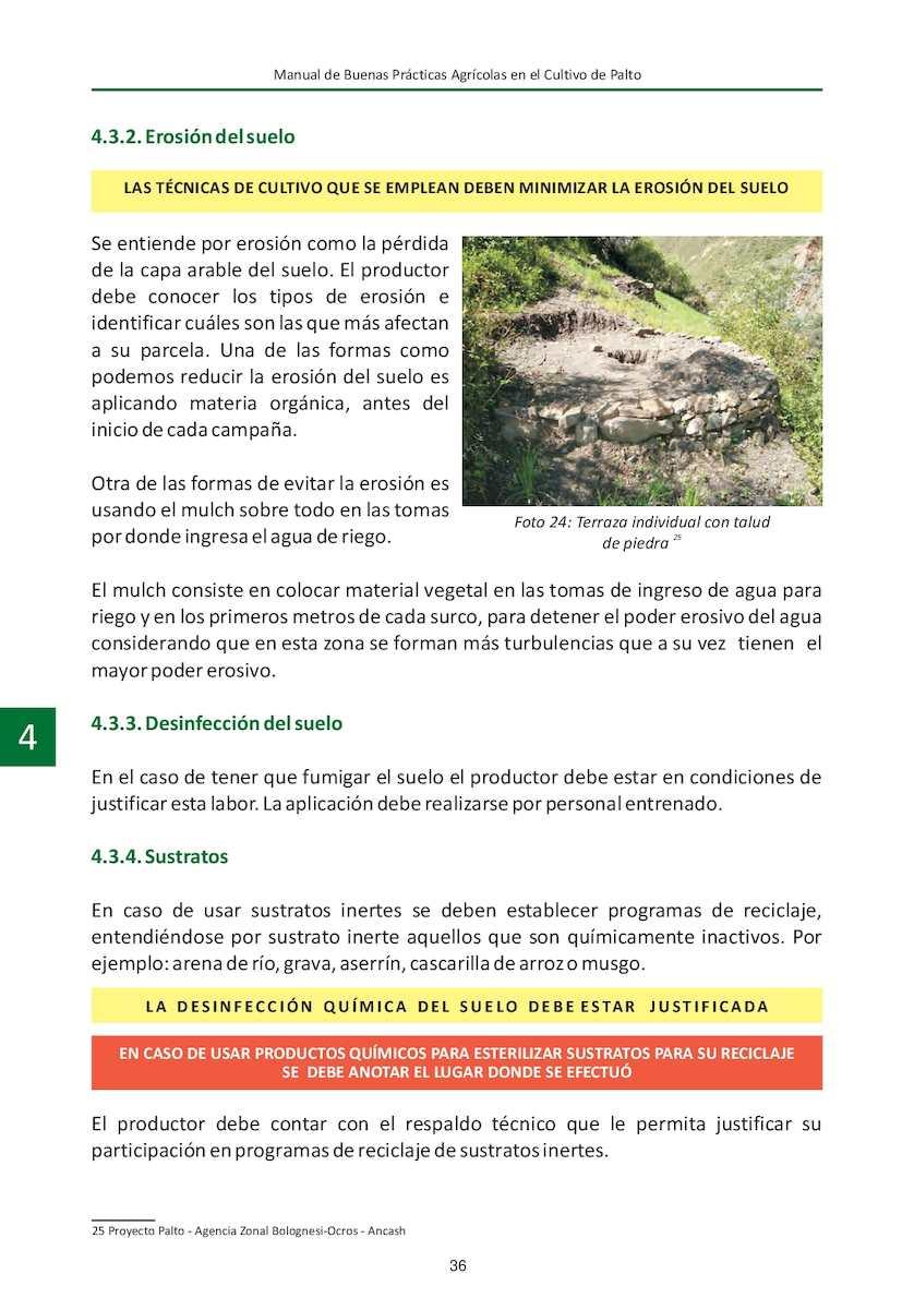 Cultivo Del Palto Agrorural Calameo Downloader