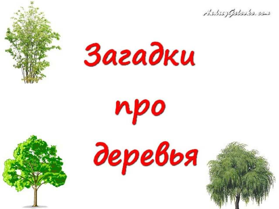 плевако дерево загадок картинки выбирая