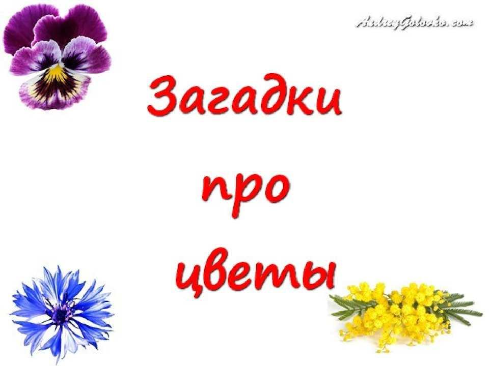 Картинка загадка с цветами ответ