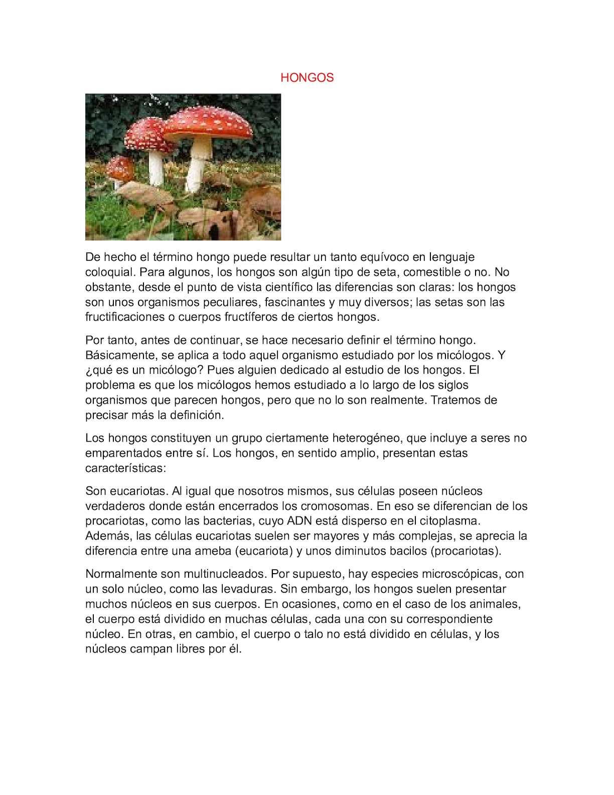 definicion de hongos en el cuerpo humano