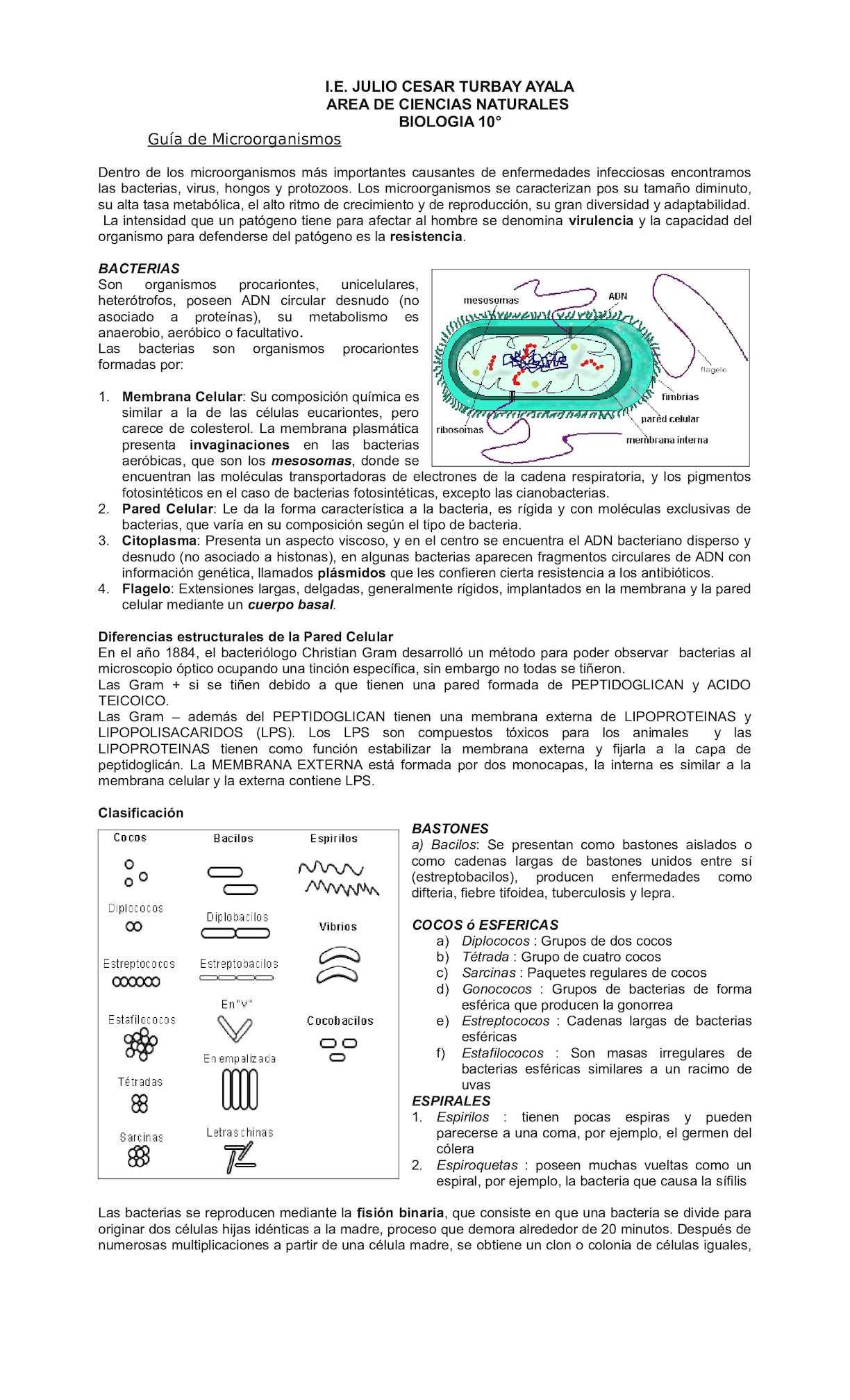 hongos y bacterias ciencias naturales
