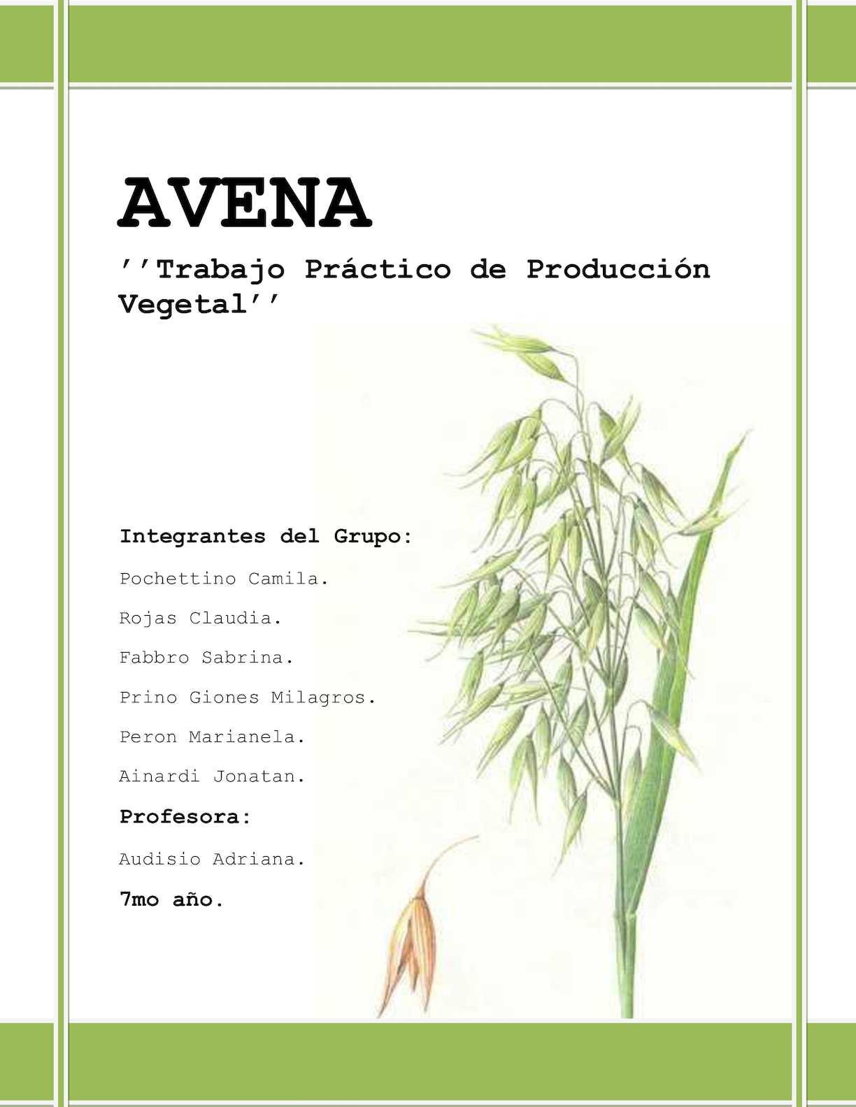 Trabajo Terminado De Avena (1)