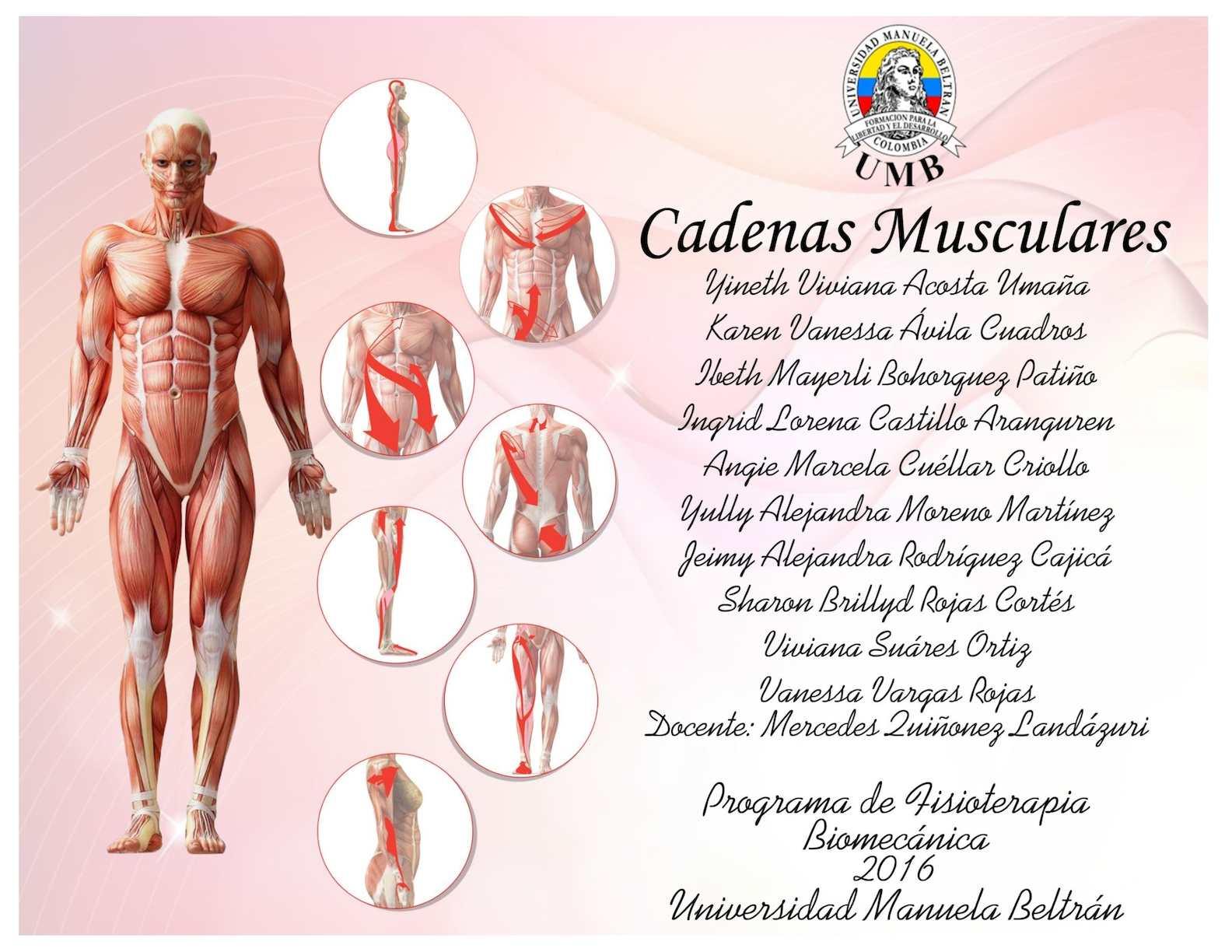 Cartilla Cadenas Musculares
