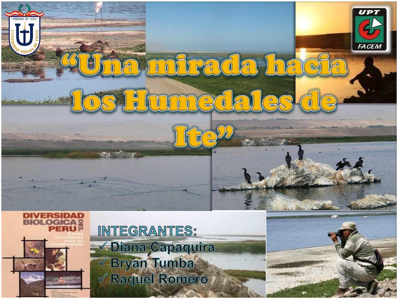 Humedales De Ite Exposicion