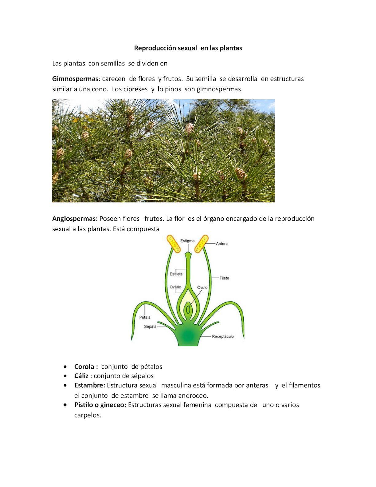Organo de reproduccion sexual de las plantas con flores