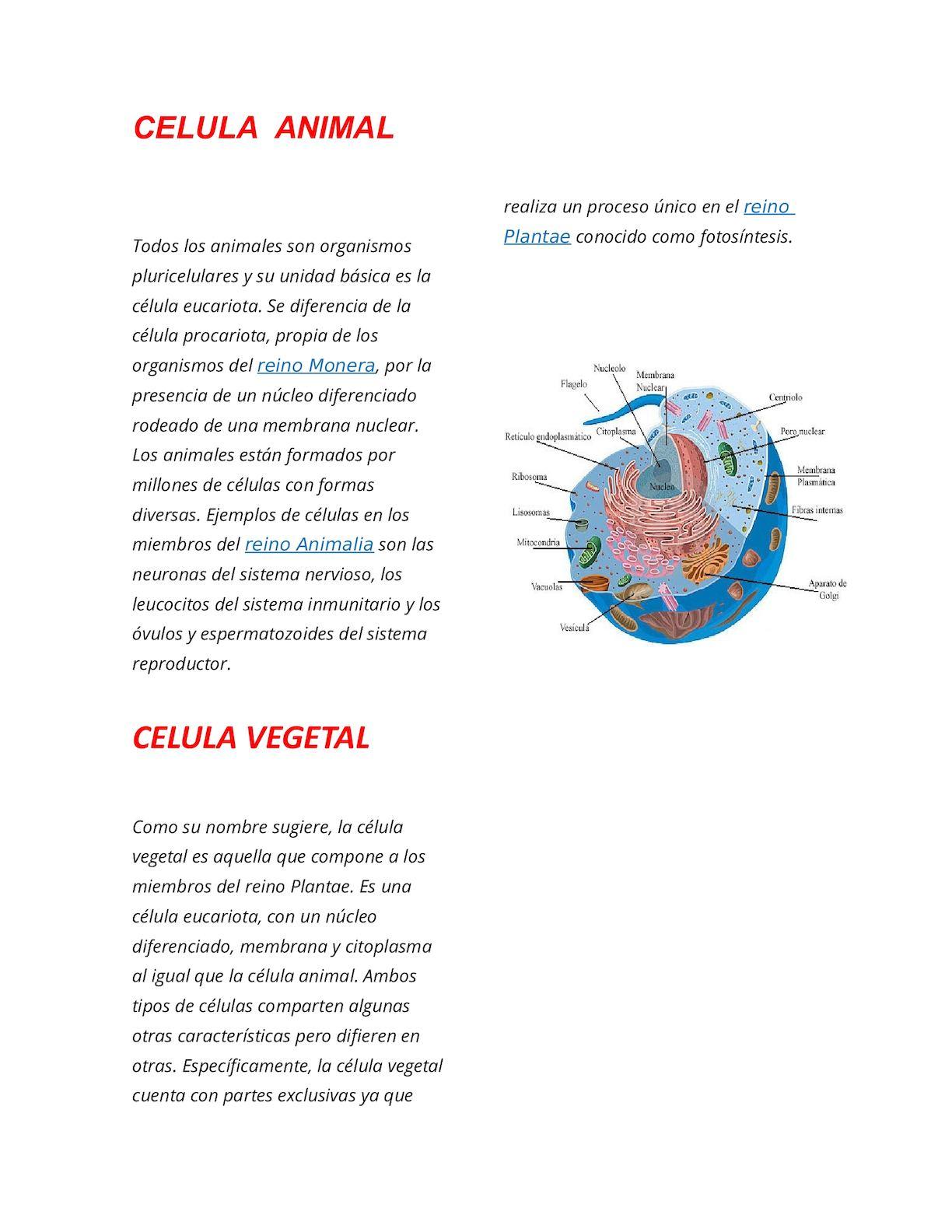 Calaméo Celula Animal