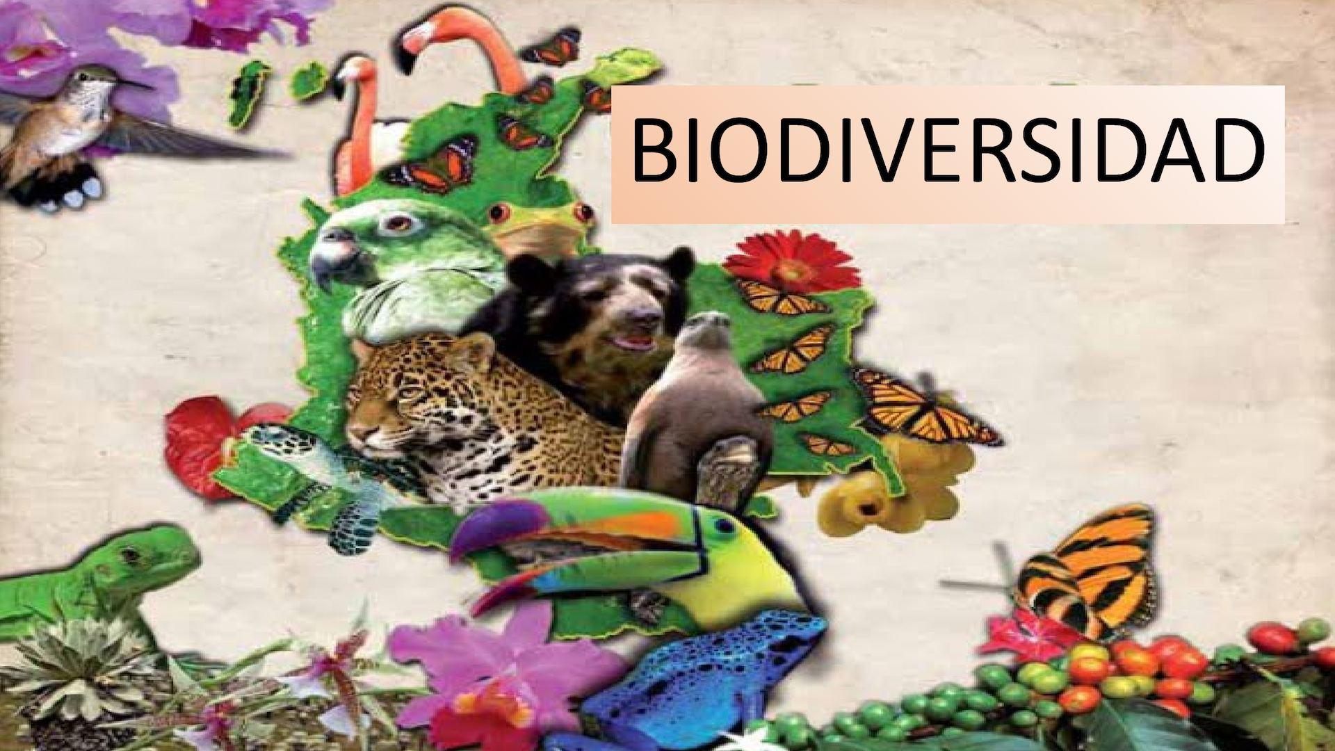 Diapositiva Biodiversidad