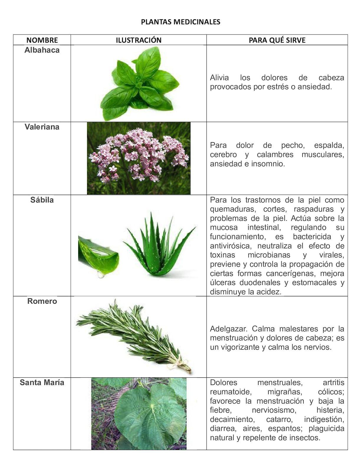 planta medicinal para los nervios y ansiedad