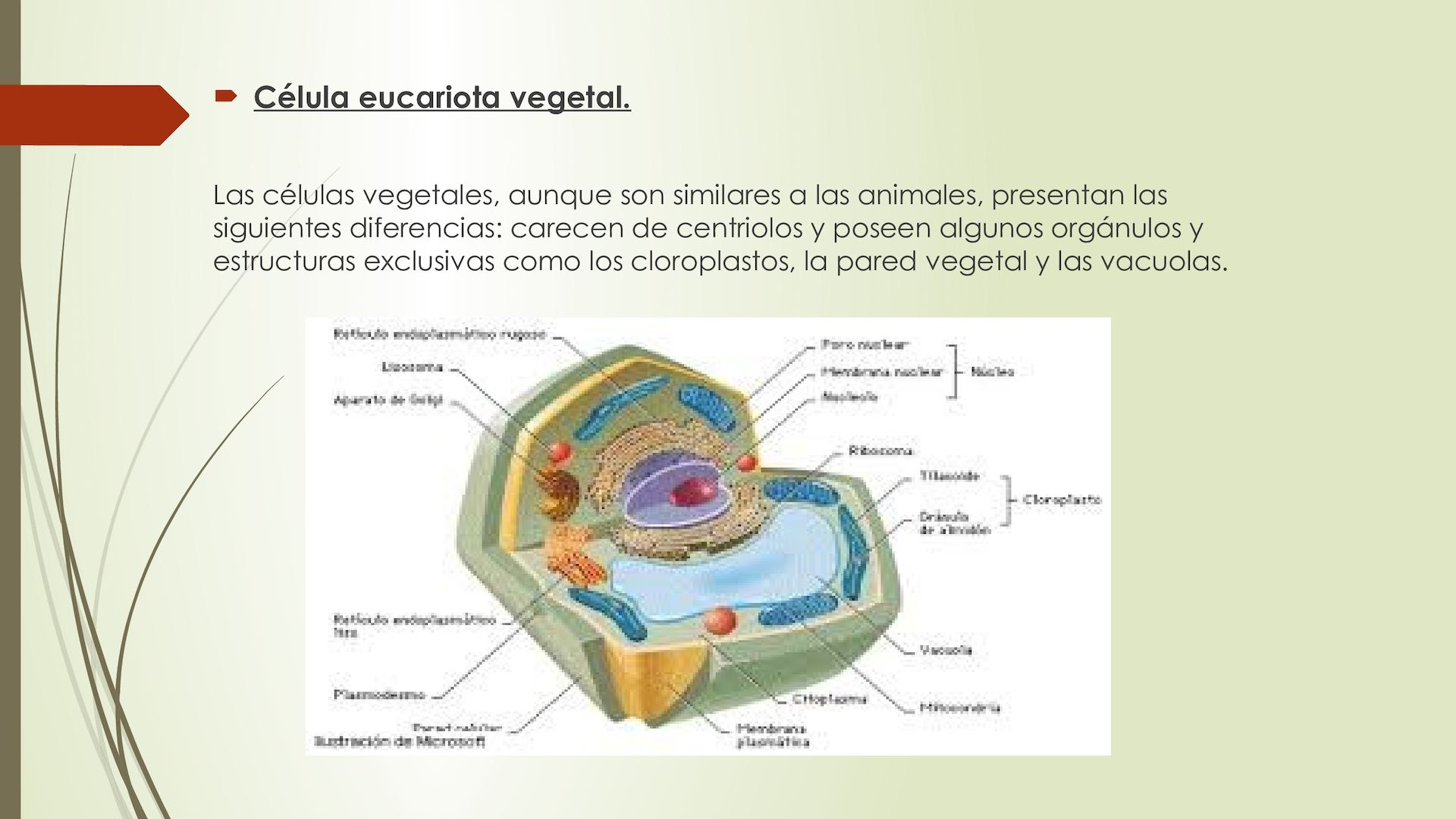 Citologia La Celula Ruben Calameo Downloader