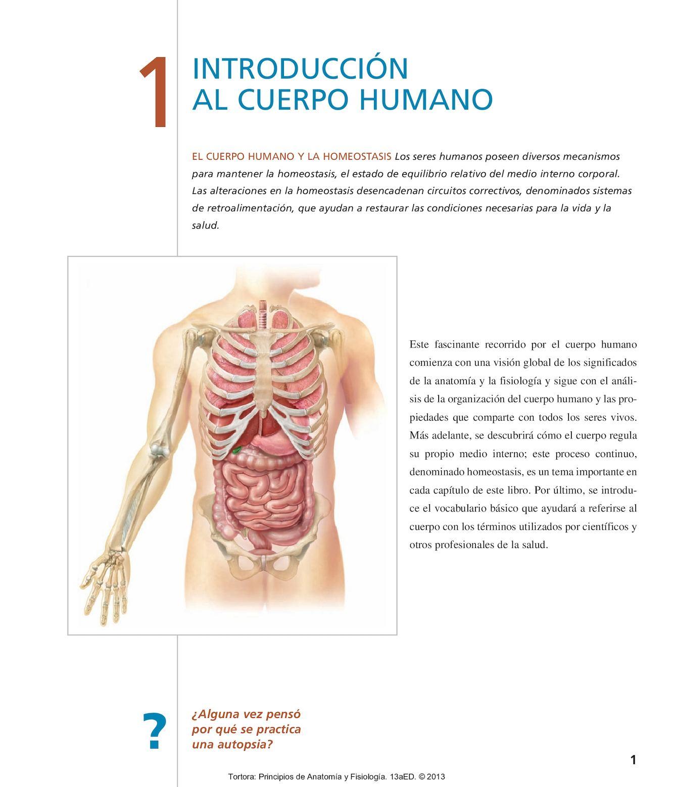 Niveles de organizacion del cuerpo humano en anatomia