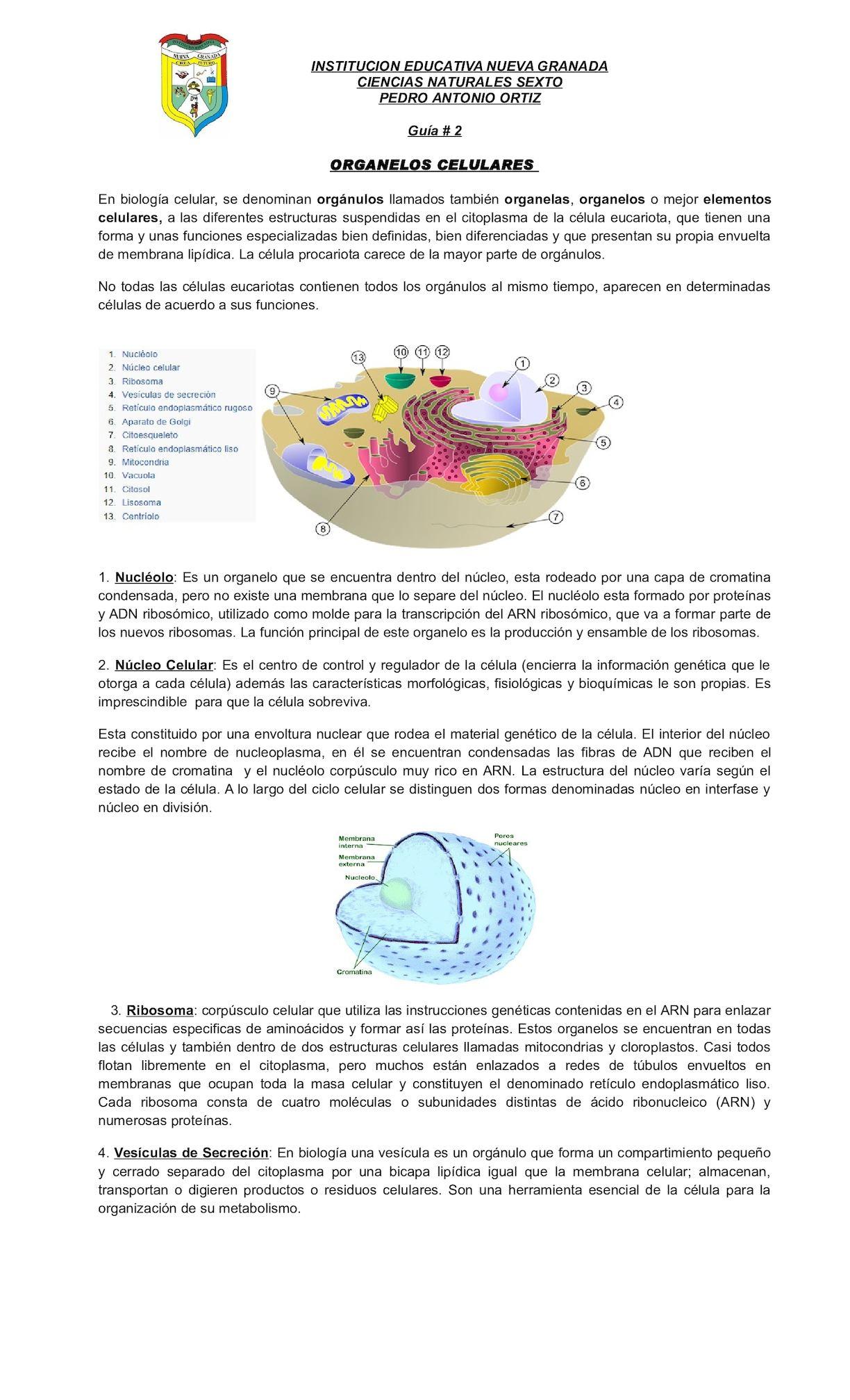 Calaméo Guia De Organelos Celulares