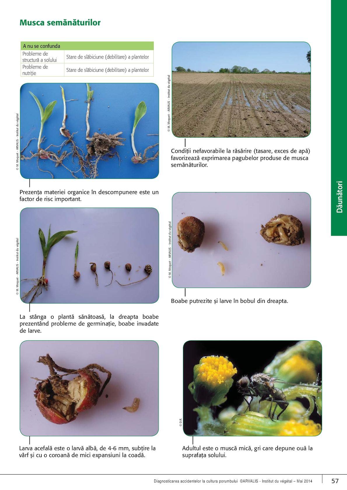 produse de corp subțire din plante