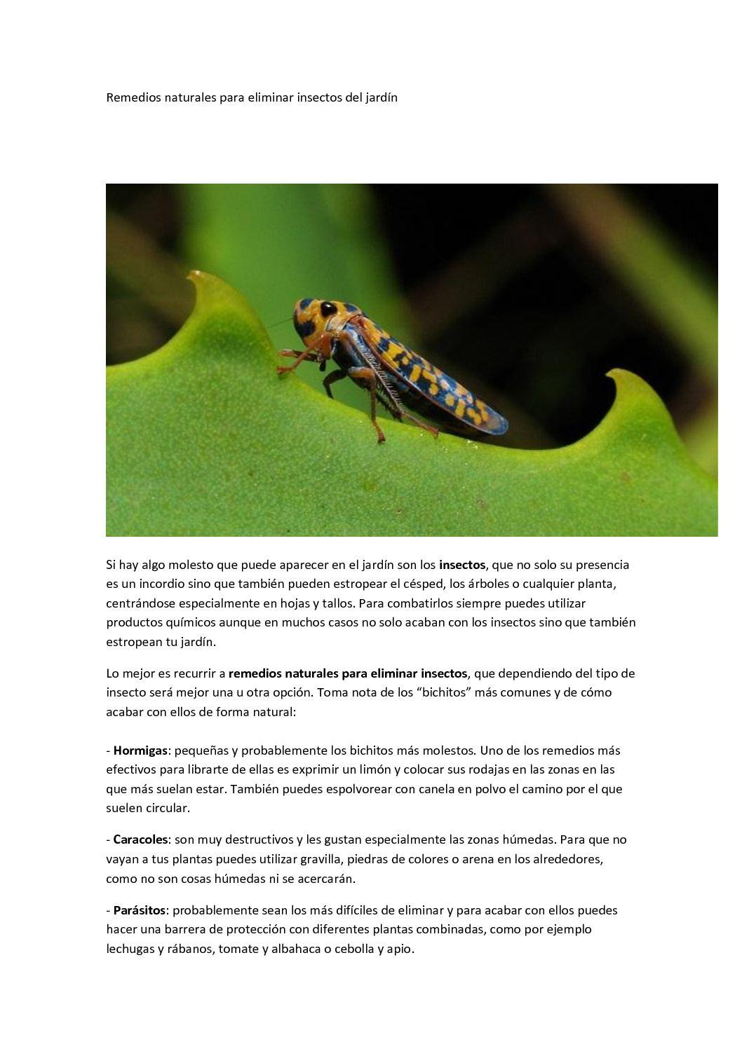 Remedios caseros para bichos en las plantas