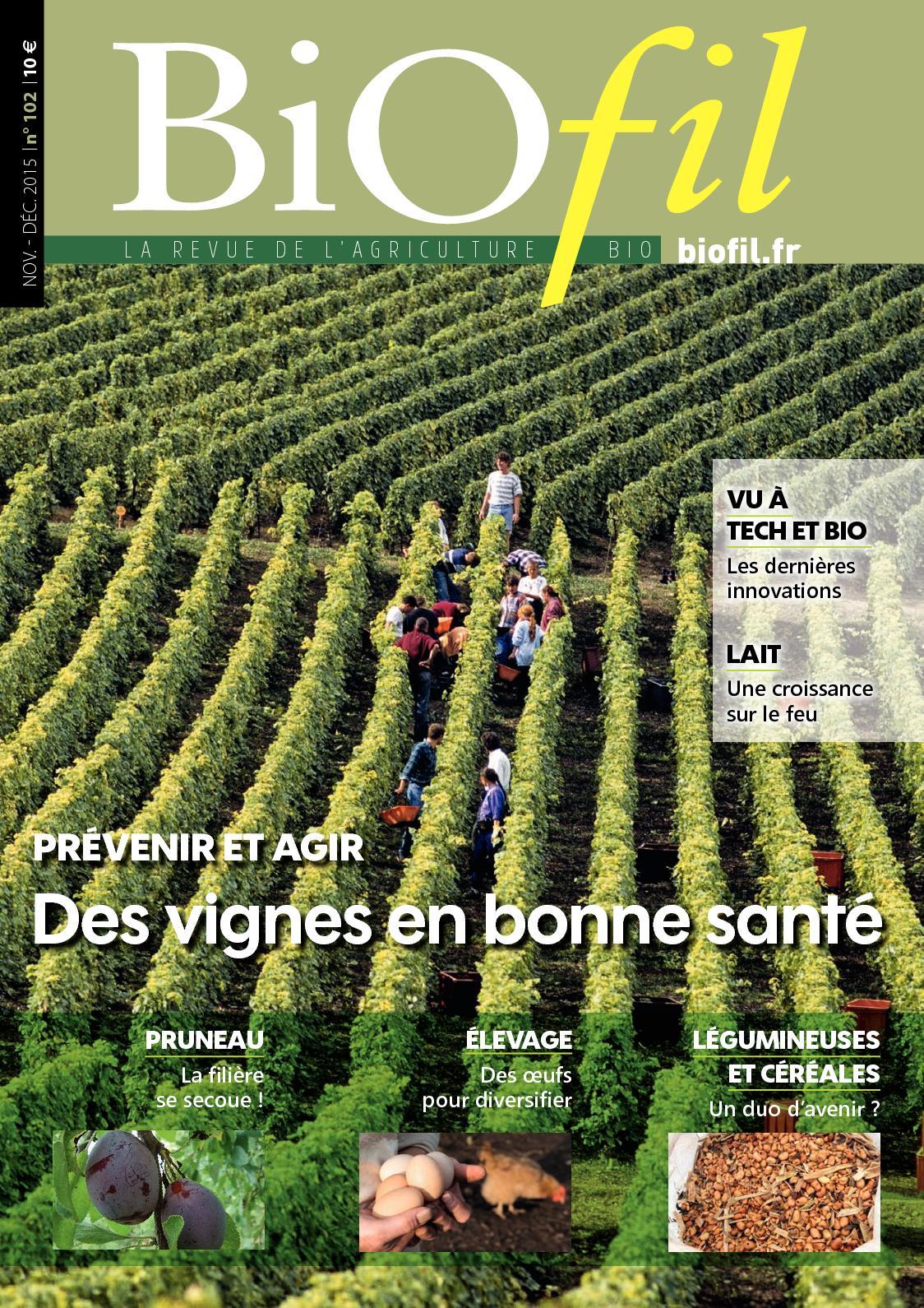 Graines de Tournesol Géant rare grosse fleur 100 graines viables Organic nain des taches solaires Yard