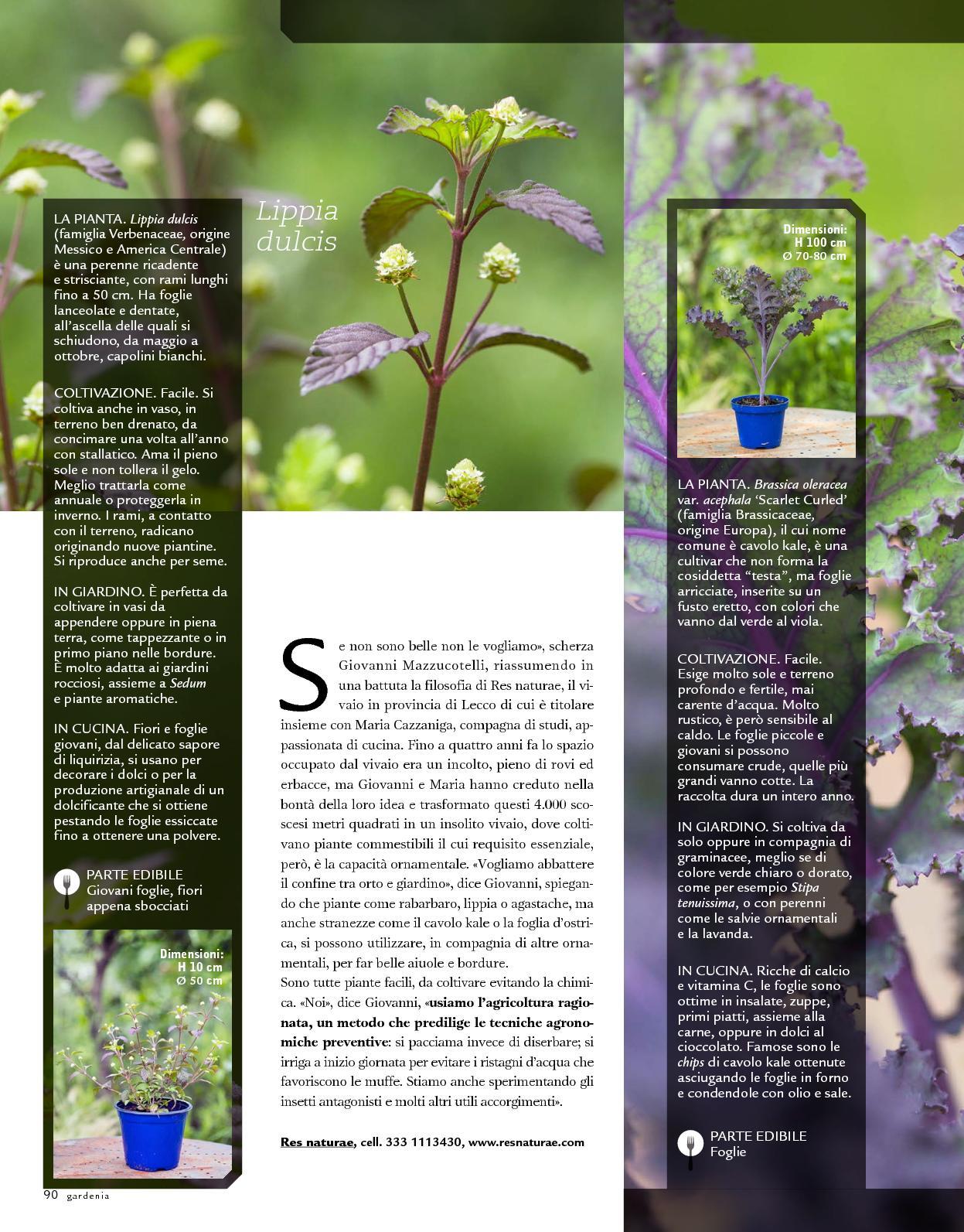 Piante Piccole Da Giardino piante da giardino semi inverno duro ornamentali pianta