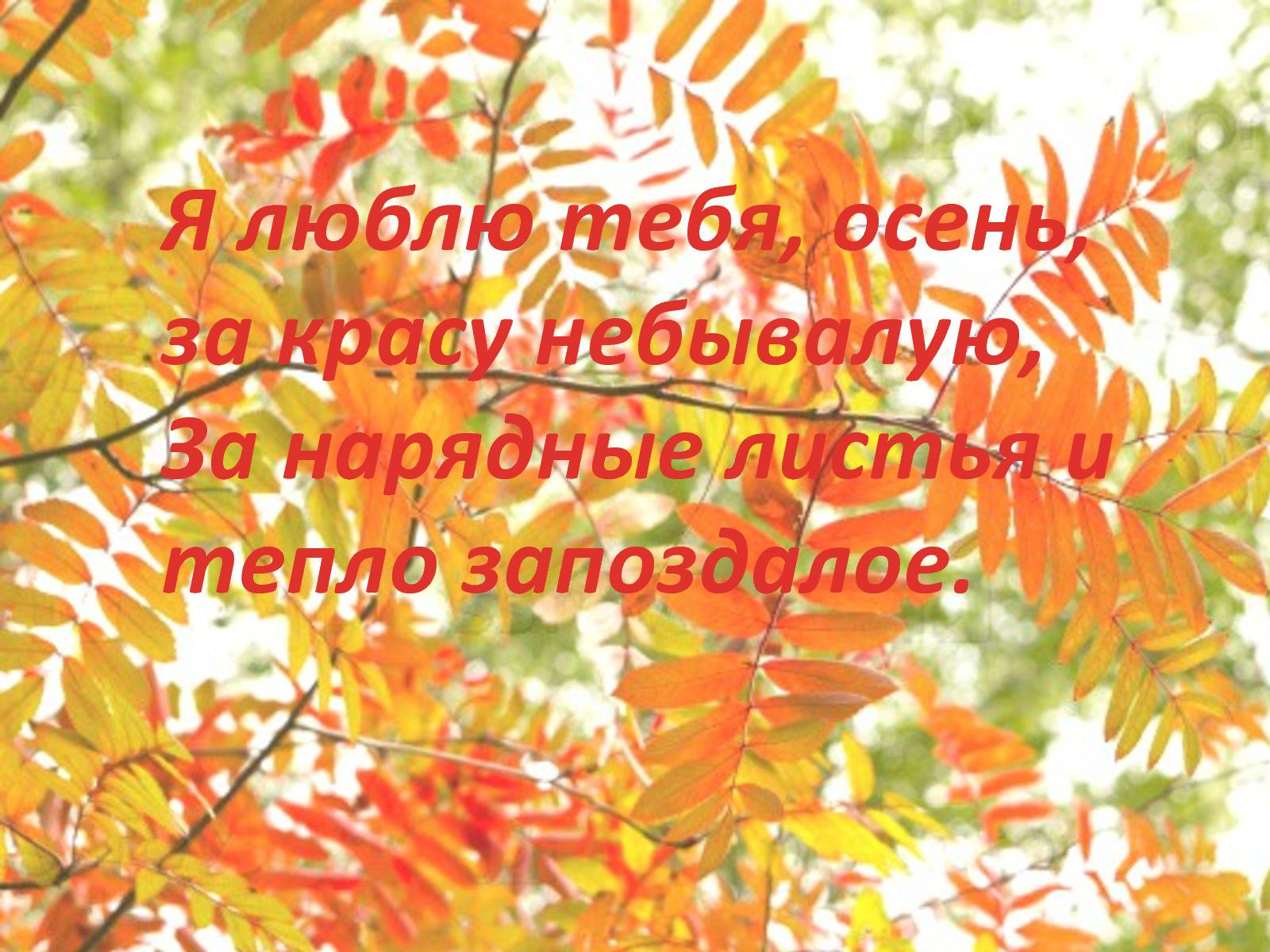 Картинки люблю тебя осень