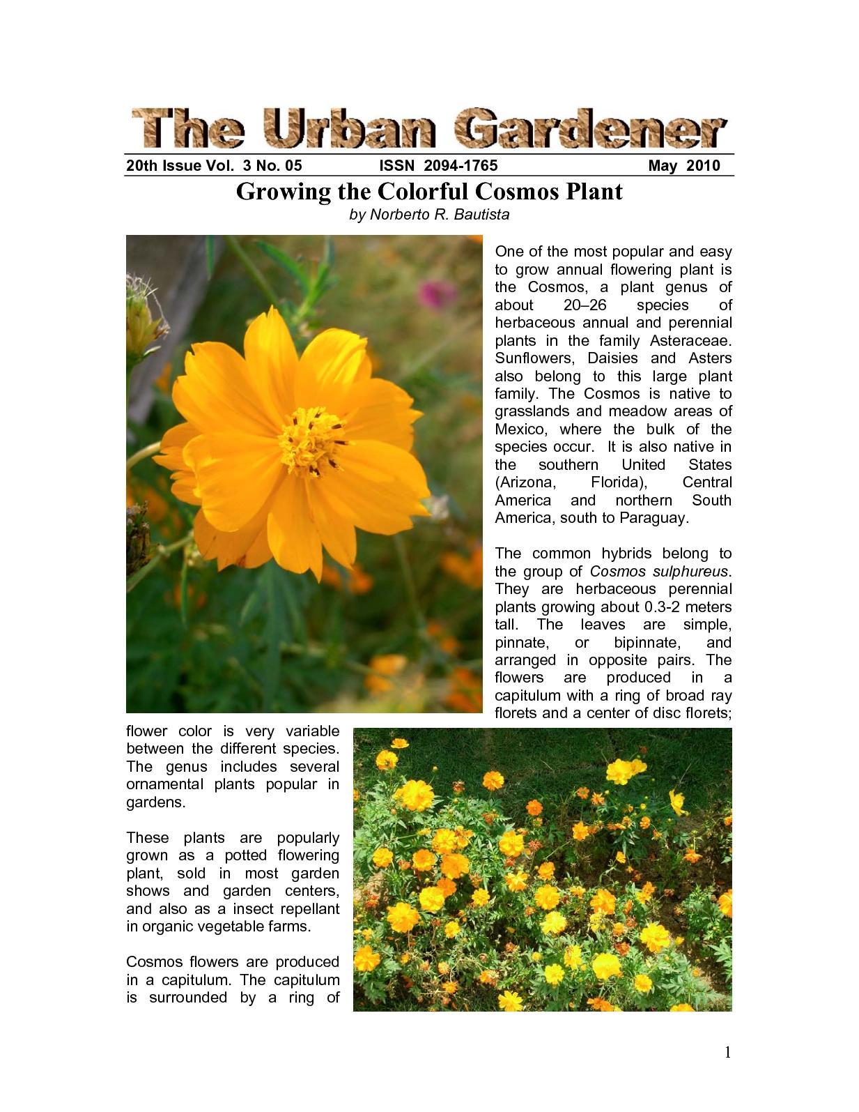 Calameo The Urban Gardener 20