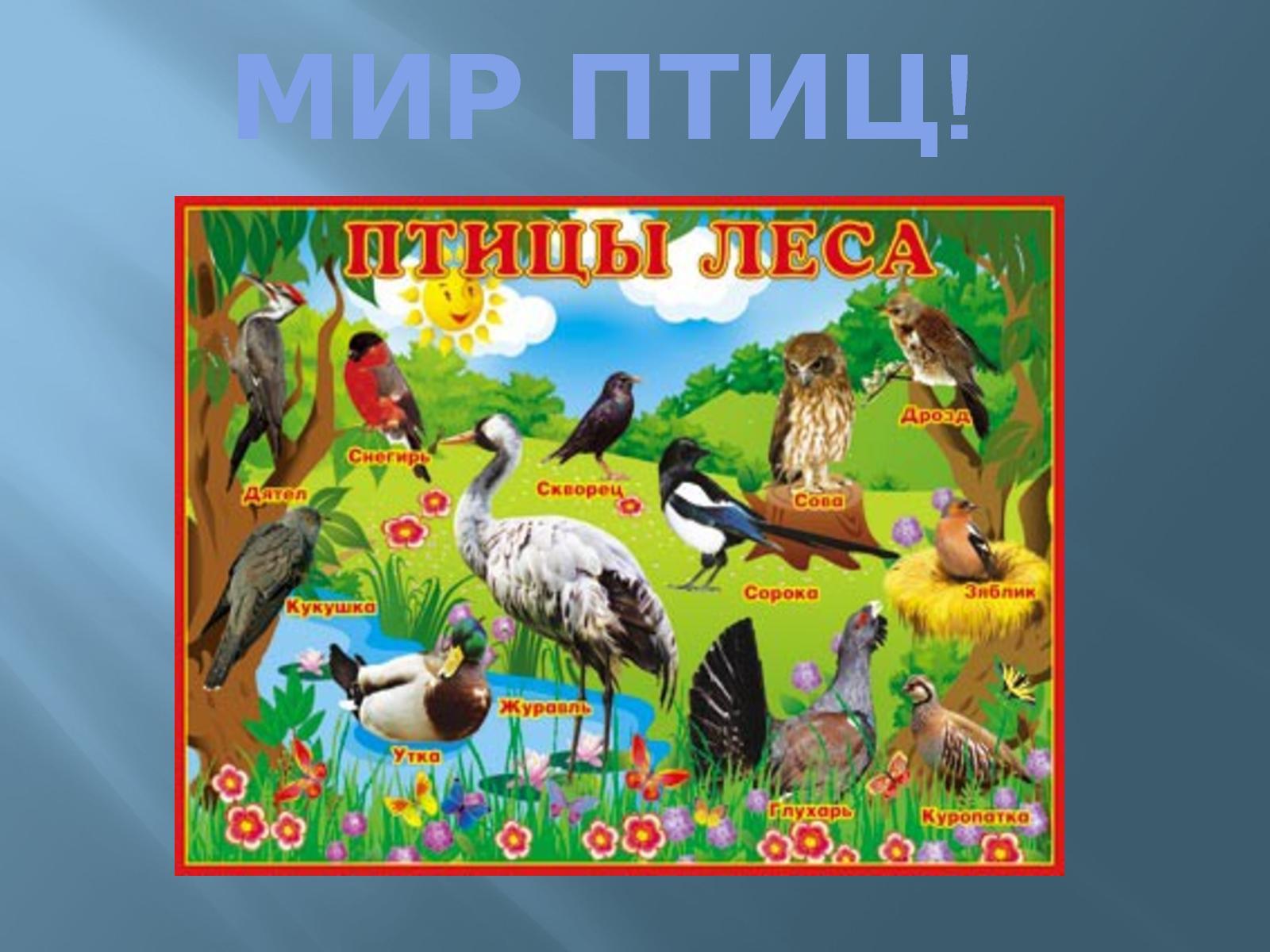 Картинки плакаты птиц