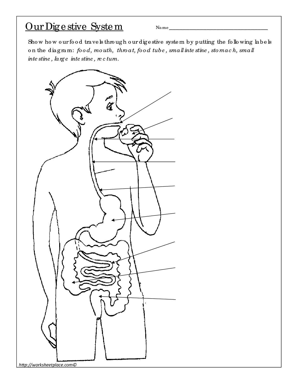 food tube diagram calam  o digestive system  calam  o digestive system