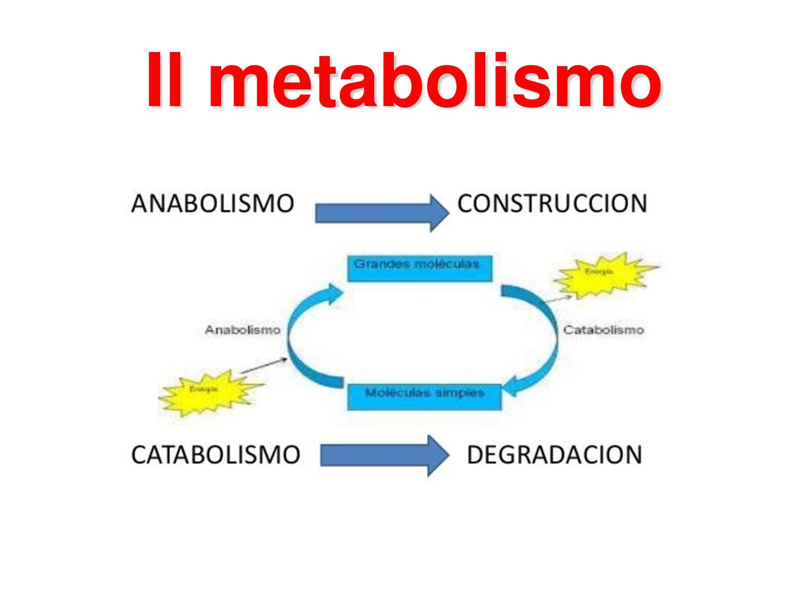 Calaméo - Metabolismo