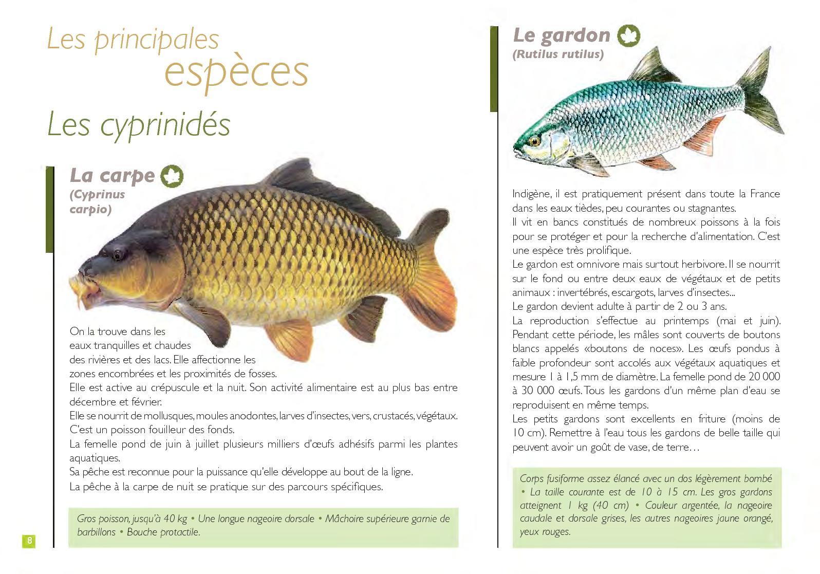 espèces de poissons 94 %