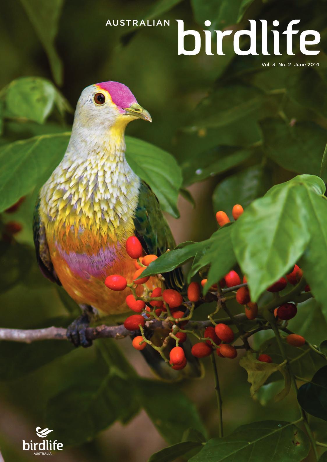 NON RSPB #4 BIRD PIN BADGE