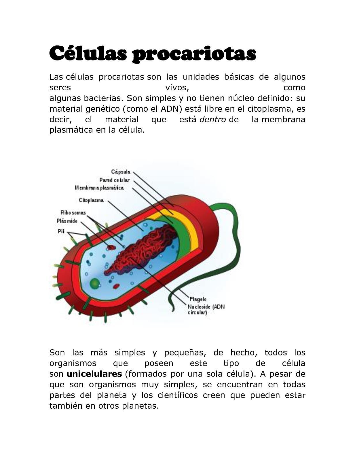 Calaméo Células Procariotas