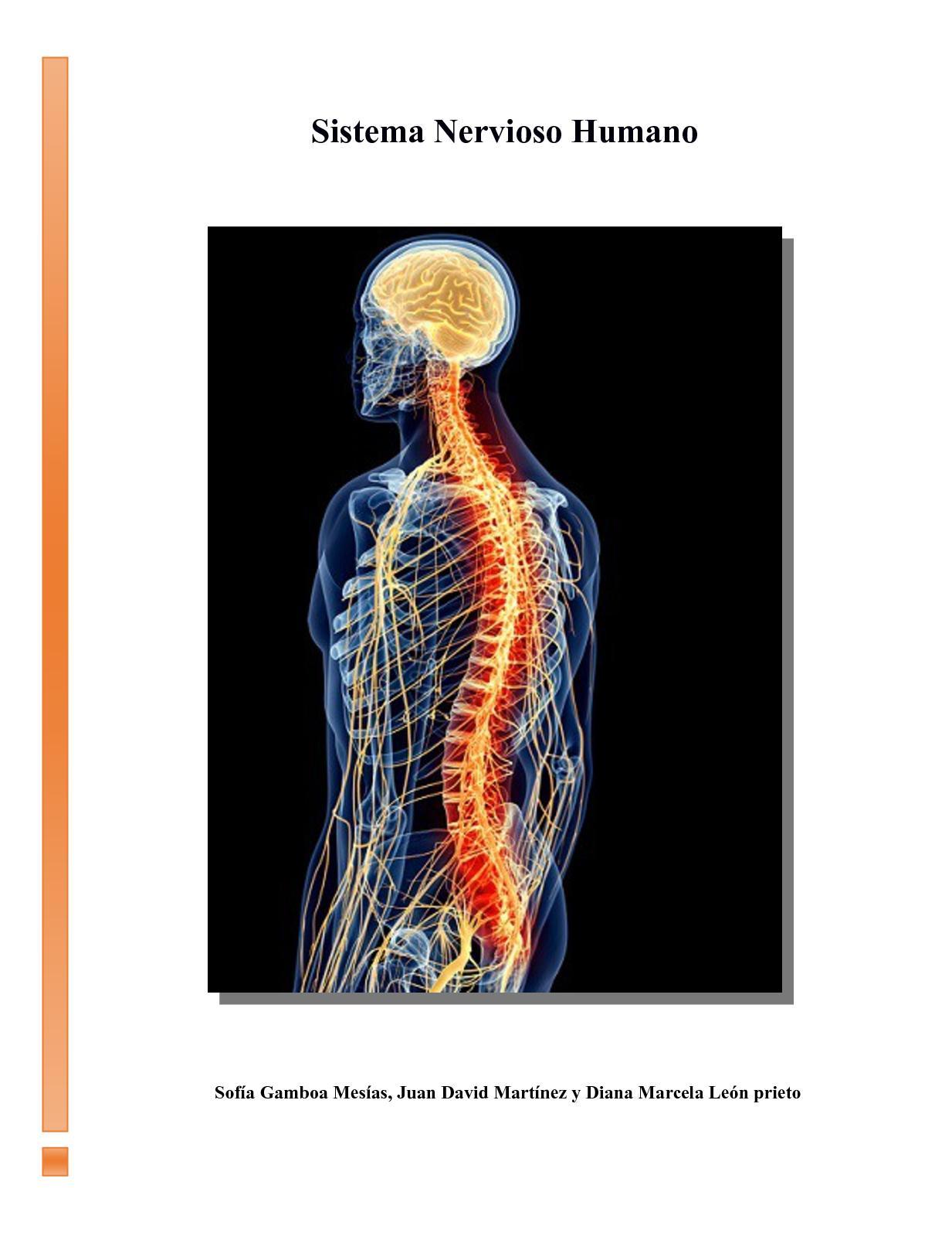 Calaméo Informe Sistema Nervioso Humano 9a