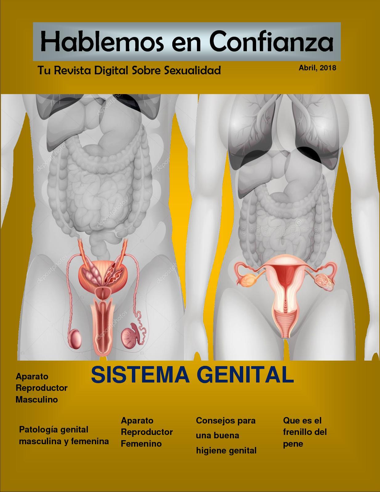 dolor en el ganglio linfático inguinal durante la erección