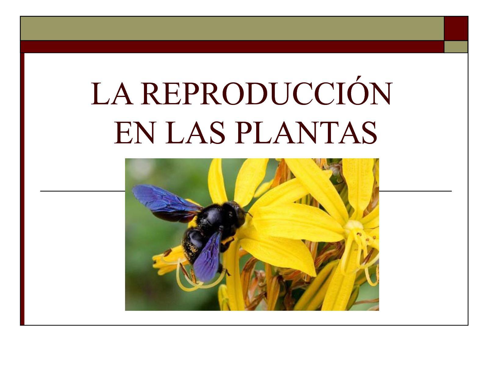 Calaméo - Reproducción En Plantas (Revista Calameo)