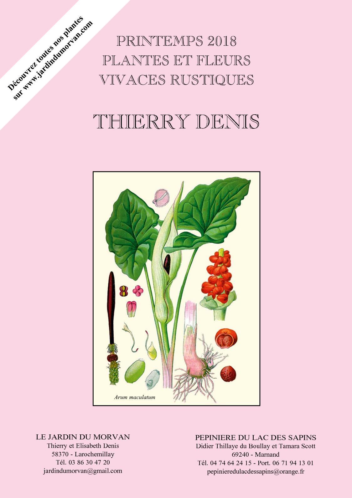 Fleurs séchées Delphinium Rose Bourgeons Verveine Gypsophile abricot fleurs feuillage