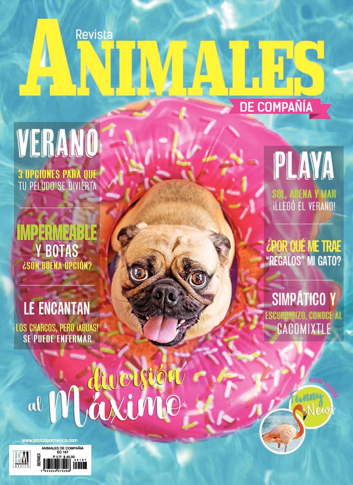 Arnés de Perro de Cuero Gris con cabeza Bulldog Francés Para Frenchies totalmente desarrolladas