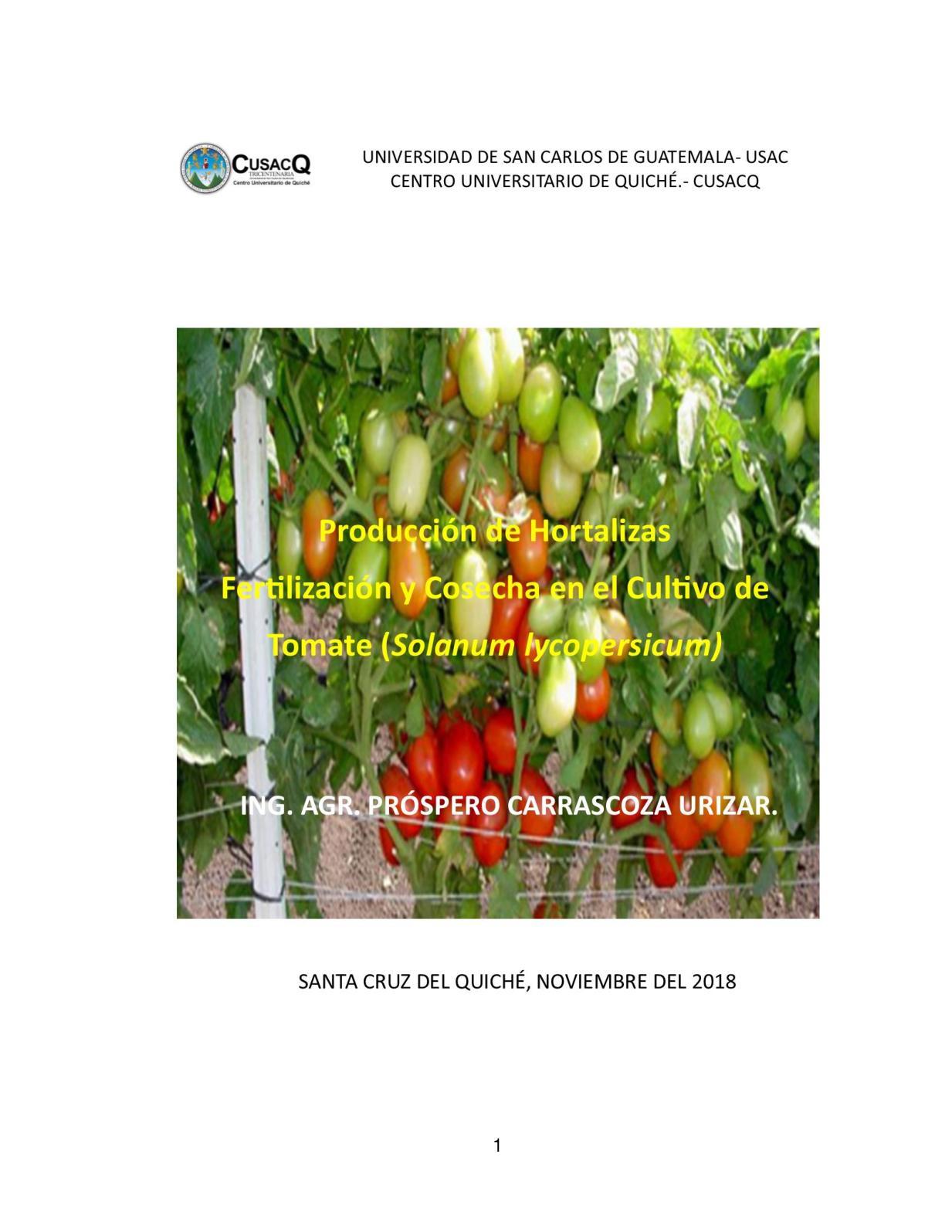 La Fertilización Y Cosecha En Tomate