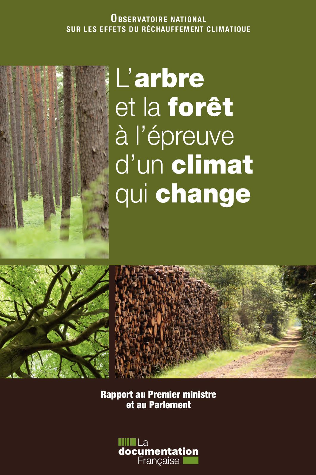 anneaux d'arbre de datation de carbone