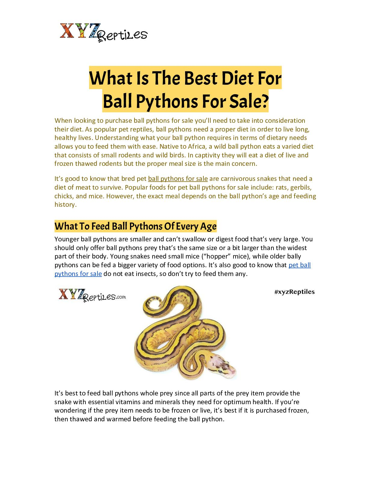 Calameo What Is The Best Diet For Ball Pythons For Sale